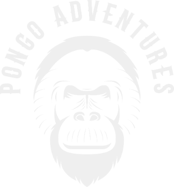 Pongo Adventures